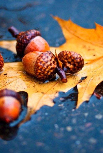 И с каждой осенью я расцветаю вновь.