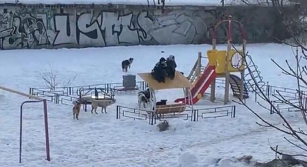 В Самарской области два мальчика спаслись от стаи бродячих собак Они забрались на маленький домик, который находился на детской площадке, и начали ждать пока прибудет