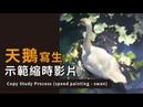 【ZUDartS】天鵝寫生示範縮時影片 Copy Study Process speed painting swan