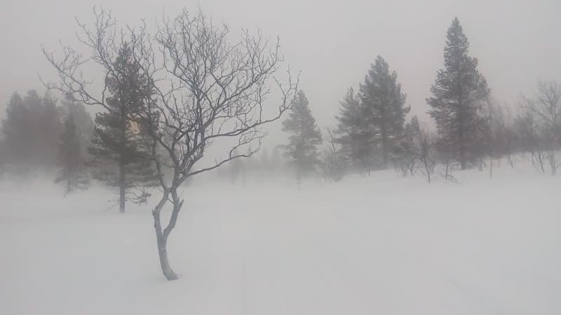 Путик на озеро Кривое в бурю VID_20200328_185028