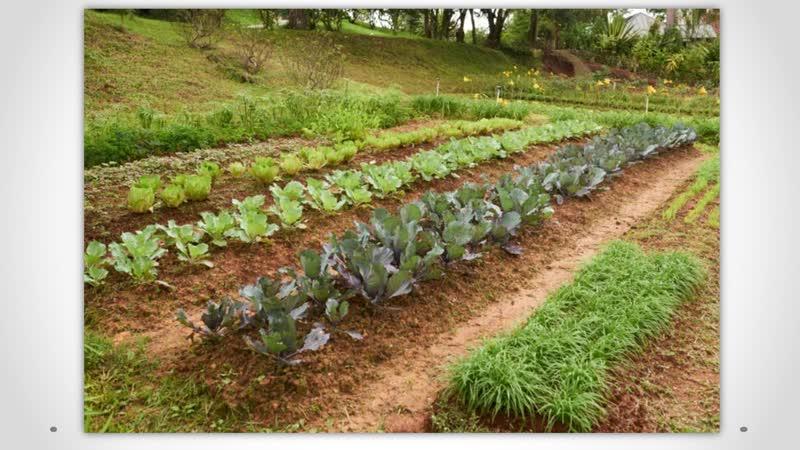 Особенности совмещенных посевов