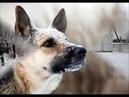 Грустная история одной собаки