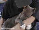 Мир не изменится благодаря спасению собаки, но для собаки мир изменится навсегда