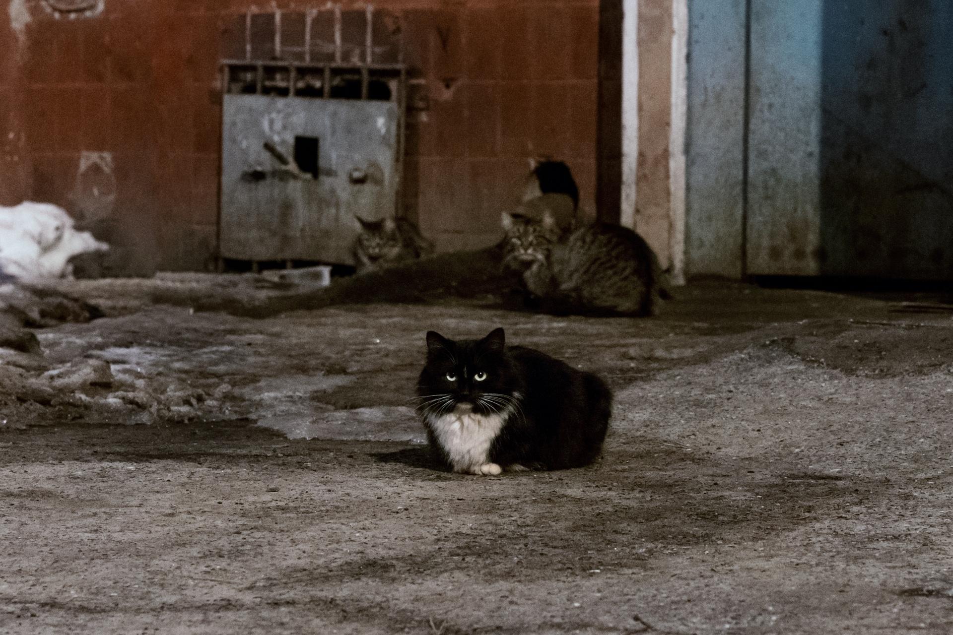 Нижегородские коты
