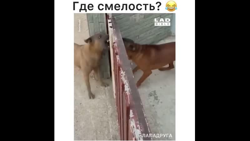Lapadruga-video-2021_02_21_13_01.mp4