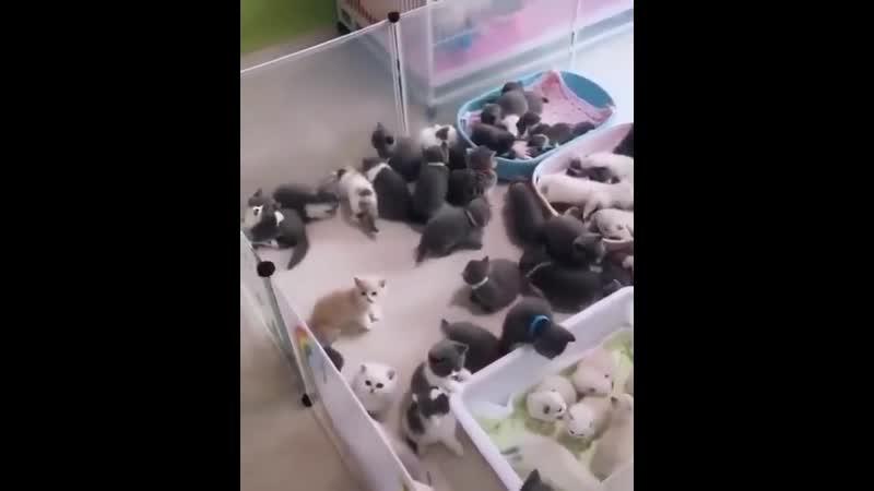Ёжкин_кот_котята.mp4
