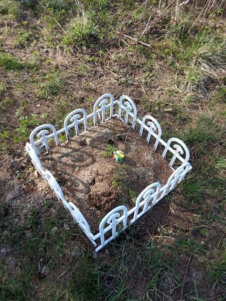 Кладбище домашних животных. Московская область, город Сергиев Посад. Любите своих маленьких друзей пока они