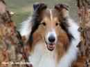 Все собаки такие разные, но их объединяет одно — преданность к своему ближнему.