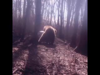 How frustrating is it to get the beaver out Join us for a fall hunt to experience this in the wild!