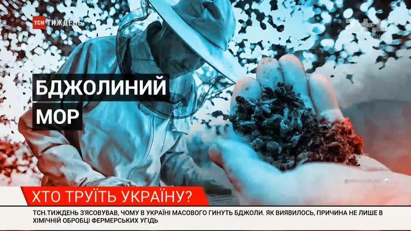Не лише хімічна обробка чому в Україні масово гинуть бджоли