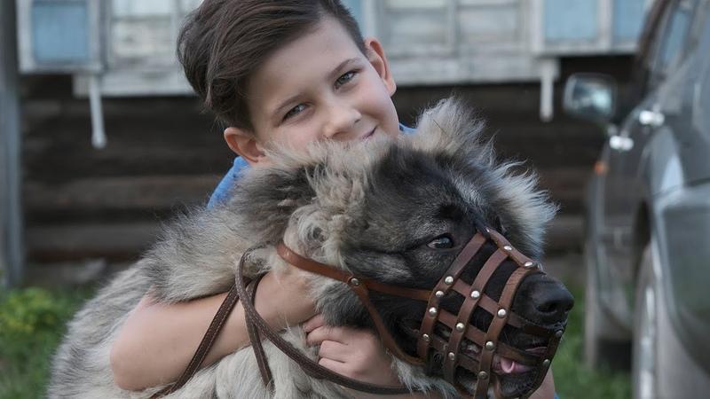 Кавказская овчарка Альфа 7 месяцев