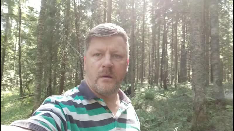 Сегодня в лесу собирал грибы и налаживал связь с дальним космосом Фото wall3987489 21044