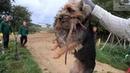 декоративные собаки Рабочая ферма Крыс с терьерами.. не хуже питбулях