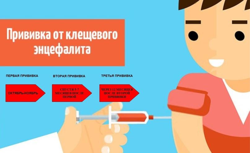 Иммунизация против клещевого энцефалита, изображение №2