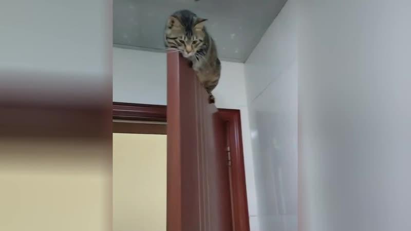 Уставший отдетей кот самоизолировался надвери ирассмешил соцсети