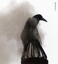 Впечатляющие снимки ежегодного конкурса фотографий дикой природы Wildlife Photographer of…