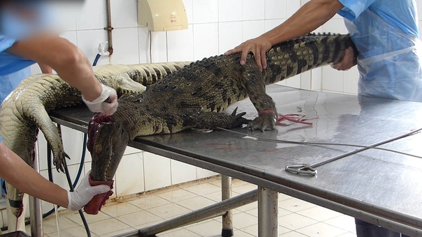 oт она, цeна бpeнда. Жестко, но это должны знать, любители крокодильей кожи.