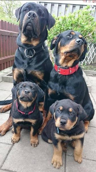 Лучший в мире семейный портрет (источник: gofazenda)