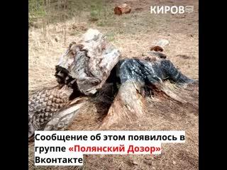 Вандалы испортили деревянные скульптуры в Вятских Полянах