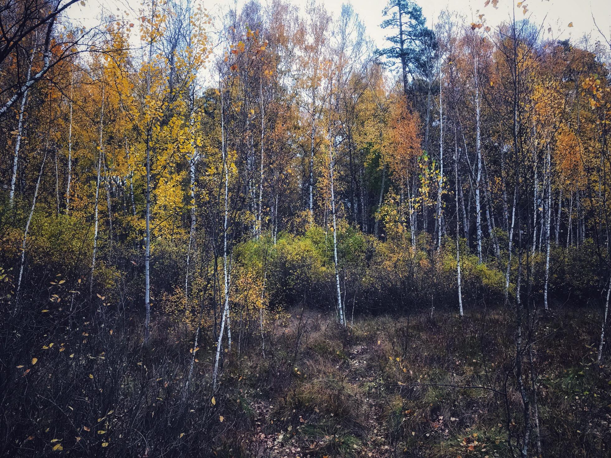Губайловское болото. Октябрь, 2019.  #Красногорск_природа