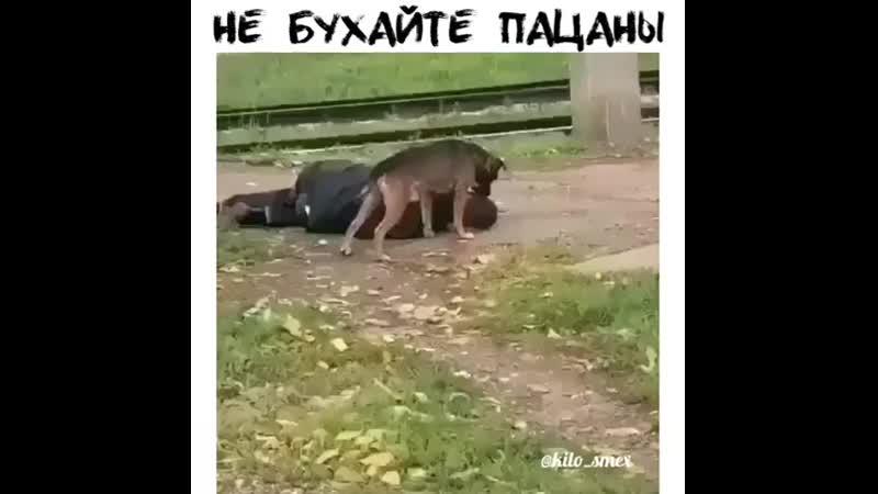 Пёс насилует пьяного 480 X 480 mp4