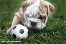 Приучение собаки играть