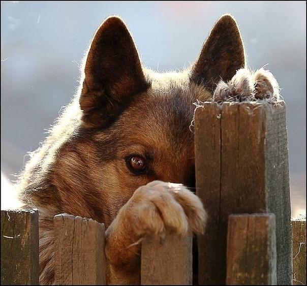 Бывает смотришь в глаза собаки, и думаешь  ЧЕЛОВЕК
