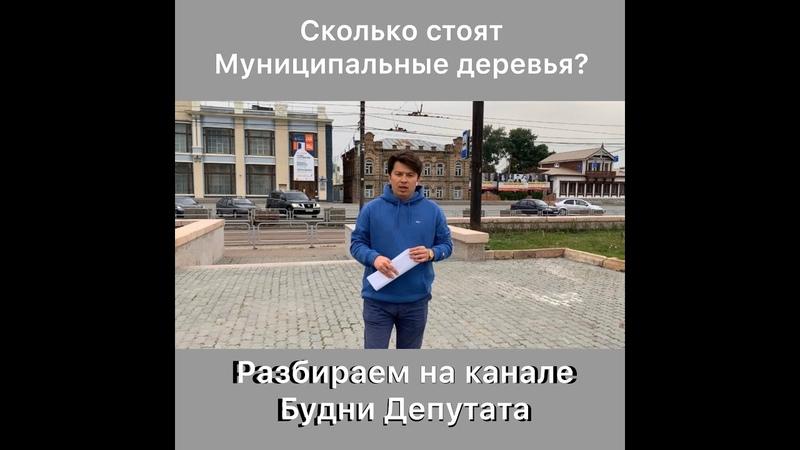 Сколько стоят муниципальные деревья в г Челябинске Разбираем на канале Будни Депутата