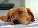 Собака, любая собака, не что иное, как передатчик эмоций на языке…