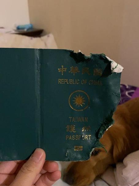 Пес спас хозяйку от смертельного заражения коронавирусом. Жительница Тайваня в социальных сетях поблагодарила своего питомца, который съел ее паспорт. В итоге, она не смогла уехать в Ухань в
