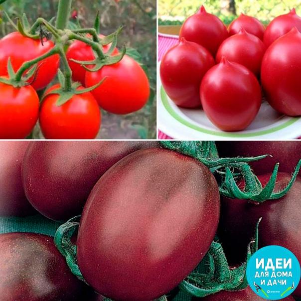 Самые неприхотливые - вкусные сорта томатов