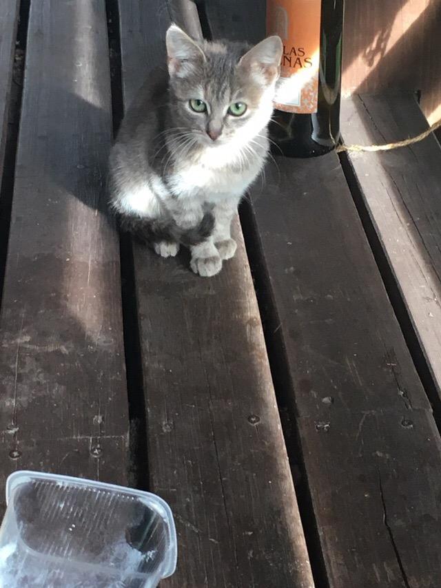 Как назвать котика?