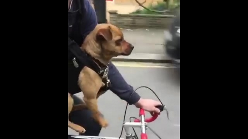 Dog Peddles Paws Through Air While Riding Bike With Owner - 989757