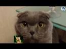 Приколы с кошками и котами 3. Подборка смешных и интересных видео с котиками и .mp4