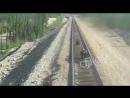 В Якутии на поезде сбили медведицу защищавшую своих медвежат