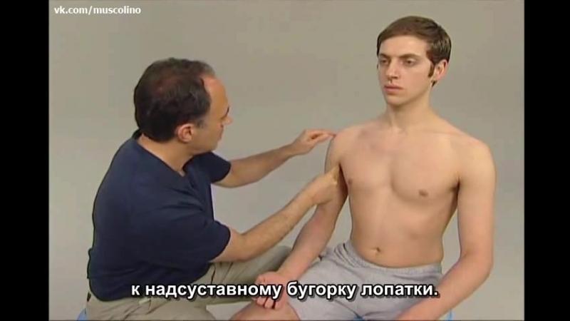 Пальпация мышц руки