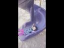 1 жас 4 ай Айару