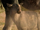 BBC Прогулки с Чудовищами Земля гигантов BBC Walking with Beasts Land of Giants 2001