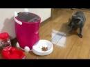 Кот испугался машину для корма Популярные хиты