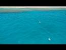 Красное море)