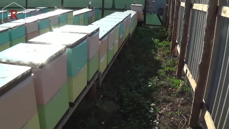 Про перцовую профилактику от пчеловода