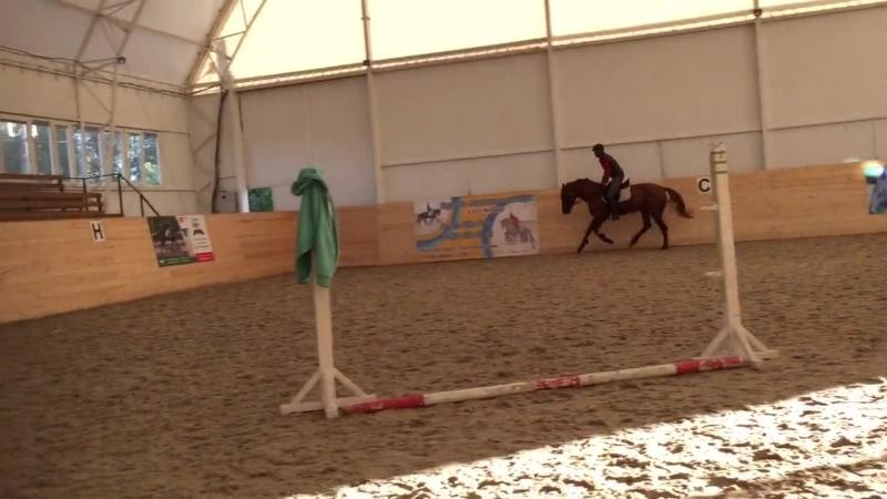 Horse for sale (Буденновский Жеребец Гудстар)
