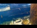 Vobler Megabass Vision Oneten 1 Underwater