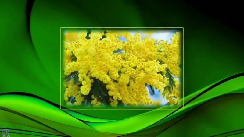 Krasivoe_pozdravlenie_dlja_milyh_dam_s_Dn...a_8marta_(480p)-spaces.ru.mp4