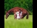 Мы пойдем с конем по полю вдвоем