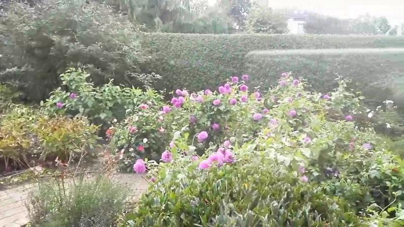 Garden Flowers in wind