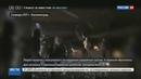Новости на Россия 24 • Следственный комитет начал проверку ЧП в аэропорту Калининграда