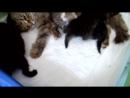 Маруся с 2-х-недельными котятами.