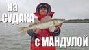 Месим СУДАКА на мандулу Отличный клёв Рыбалка 2018 с FishingSib