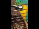 Jessie the parrot in now home safe sound with her owner and she had this to say to the fir